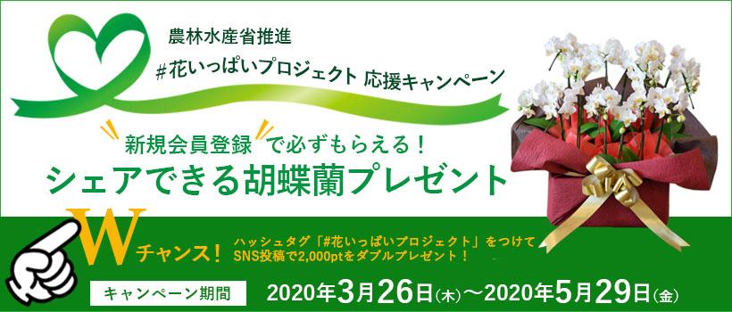 花いっぱいプロジェクト応援キャンペーン  新規会員登録で 「幸せのおすそわけ・シェアタイプ胡蝶蘭」プレゼント実施中!